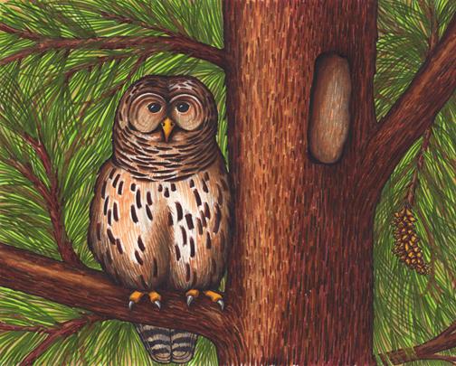 Owl (Barred)
