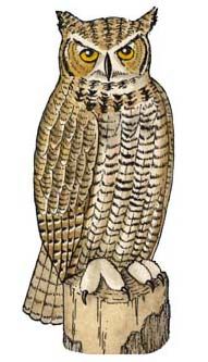 Owl (Great Horned)