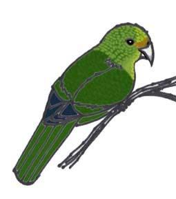 Parakeet (Orange-fronted) or Kakariki