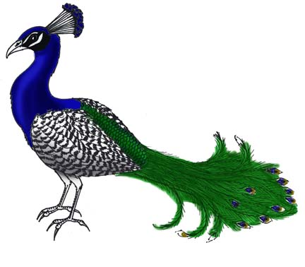 Peacock (Indian)
