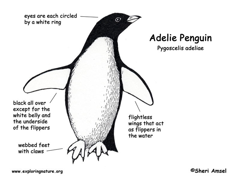 emperor penguin body parts Book Covers
