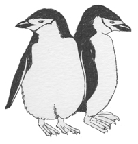 Penguin (Chinstrap)