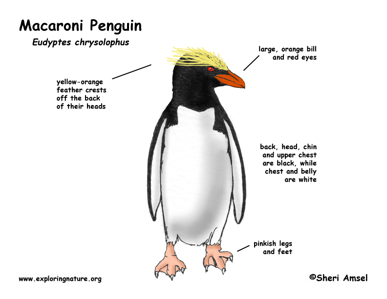 macaroni penguin happy feet 2000 road king wiring diagram