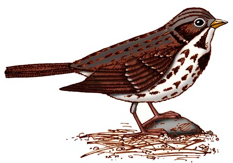 Sparrow (Fox)