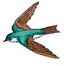 Swallow (Tree)