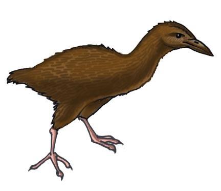 Weka (Bush Hen)