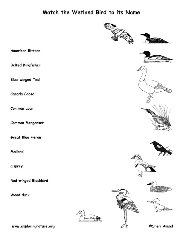 Match the Wetland Bird to its Name