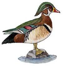 Duck (Wood)