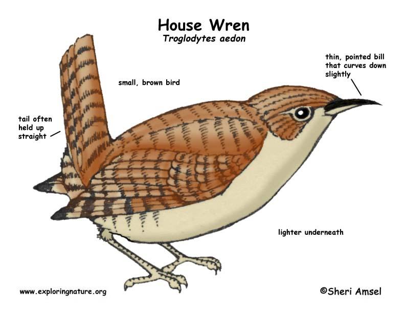 Wren (House)