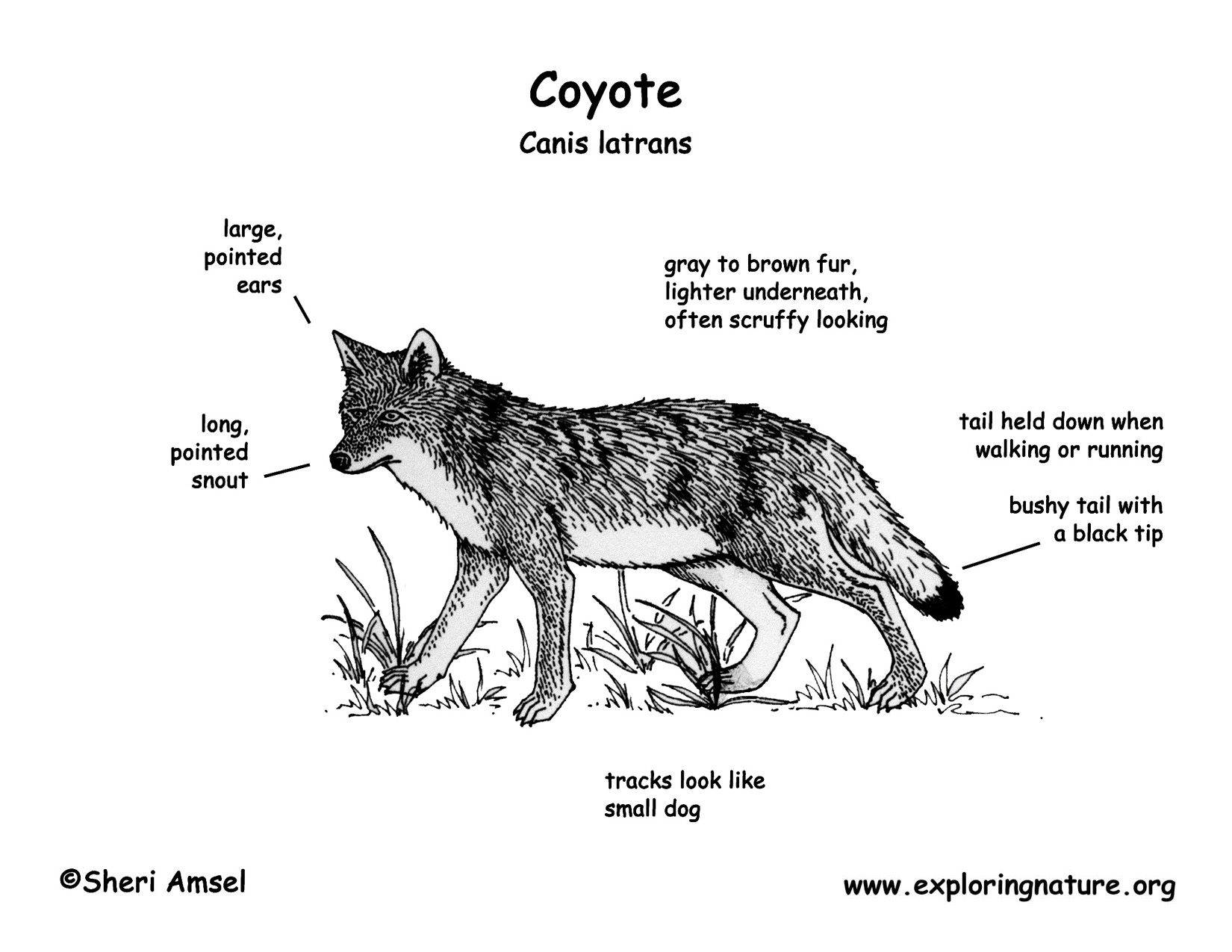 coyote engine diagram  coyote  free engine image for user