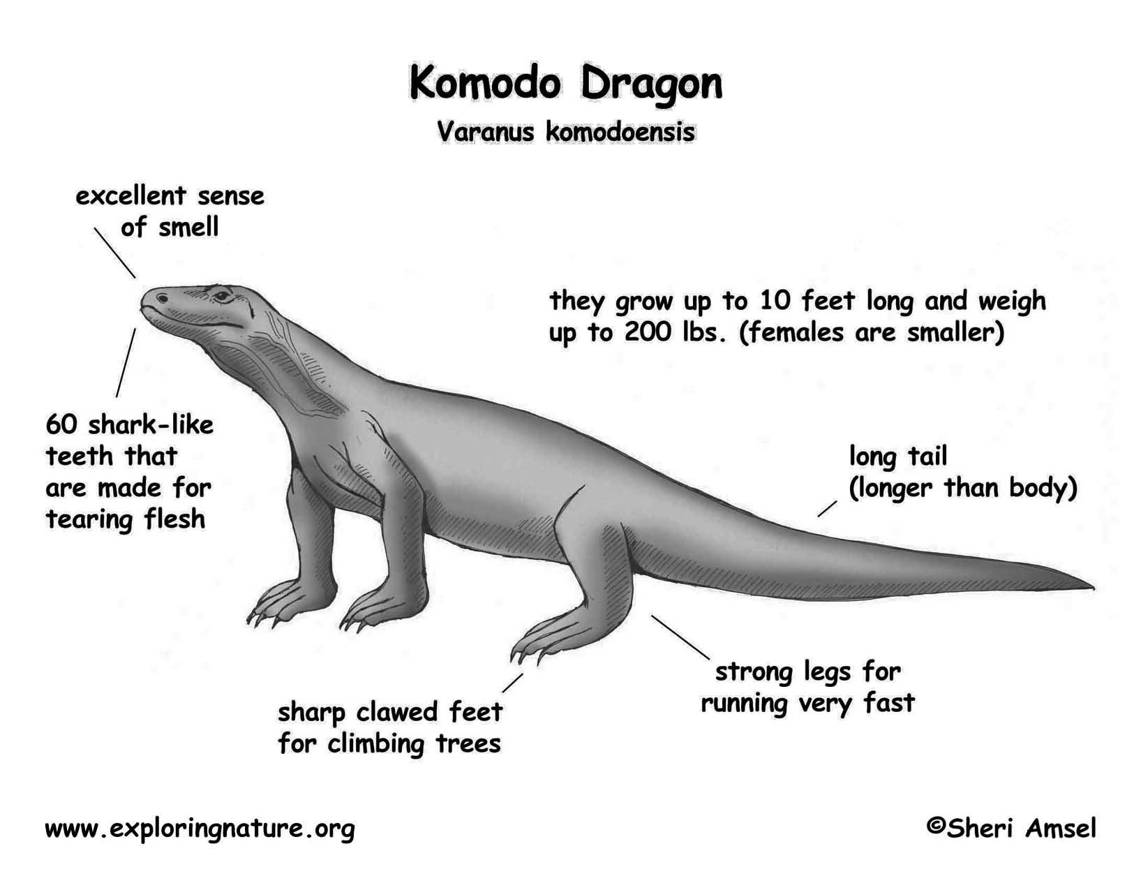 Komodo Body Diagram - Block And Schematic Diagrams •