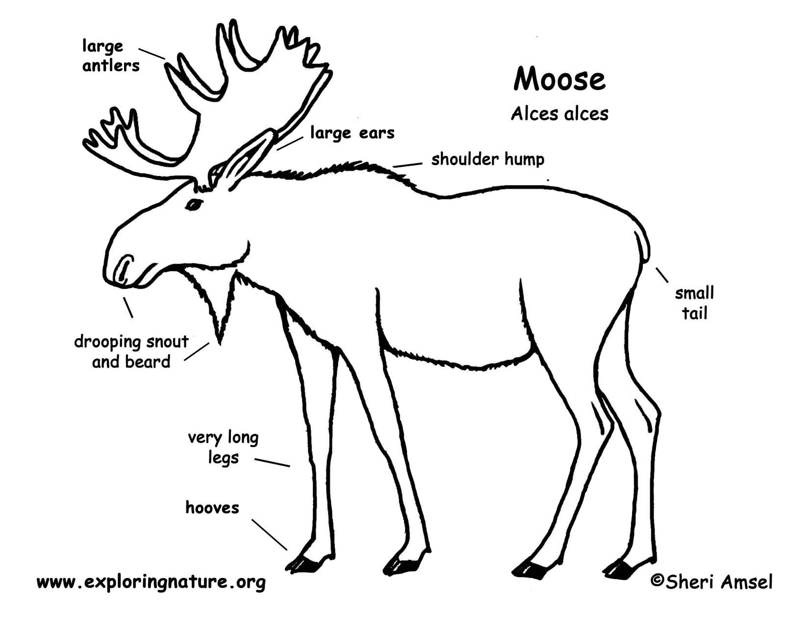 Diagram Of Moose - Residential Electrical Symbols •
