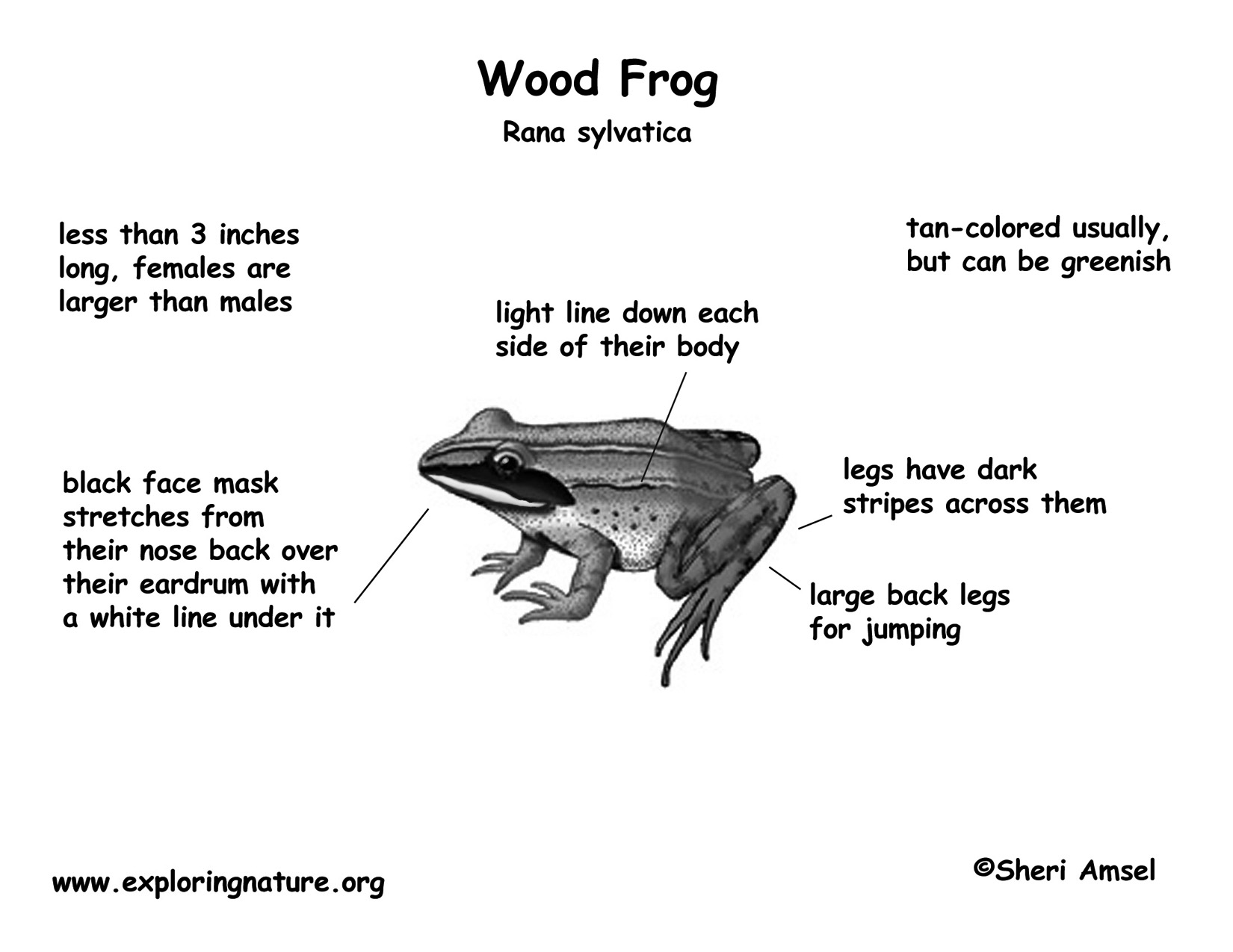 Frog wood download hi res bw diagram pooptronica