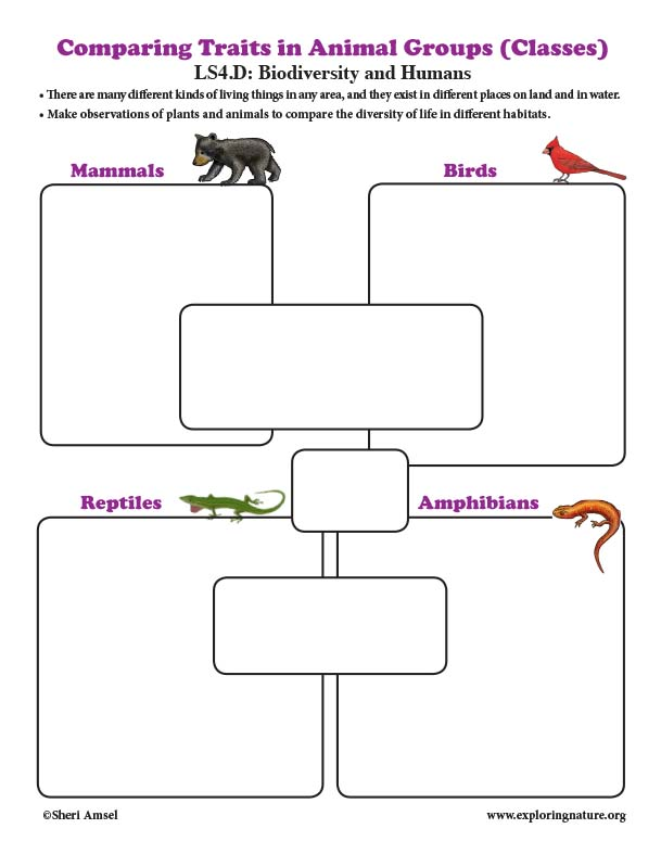 Comparing Traits in Animal Groups (Classes) - Graphic Organizer