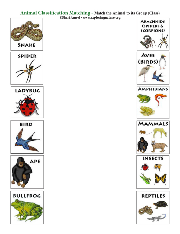 Matching Animals to Their Class (Color)