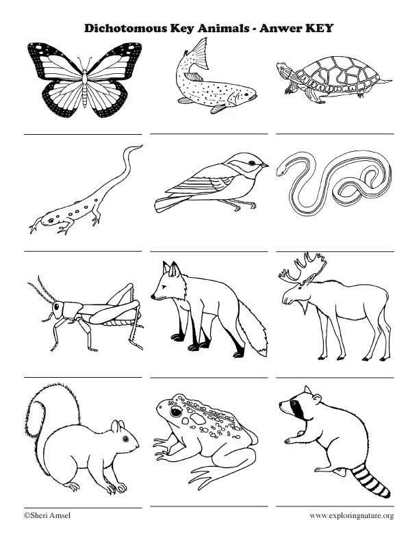 Dichotomous Key - Introduction Activity (Classification), animal classification
