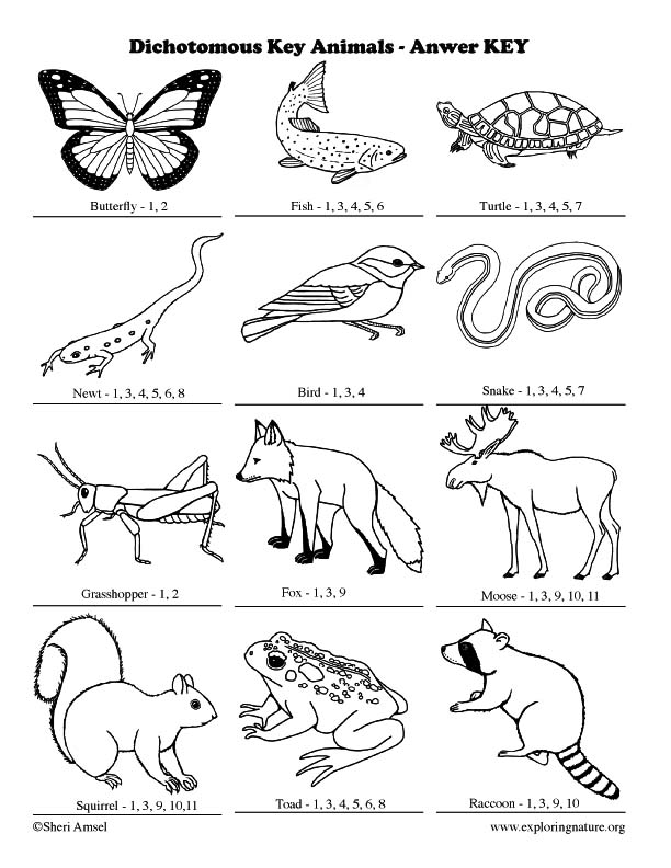 Dichotomous Key Introduction Activity – Dichotomous Key Worksheet