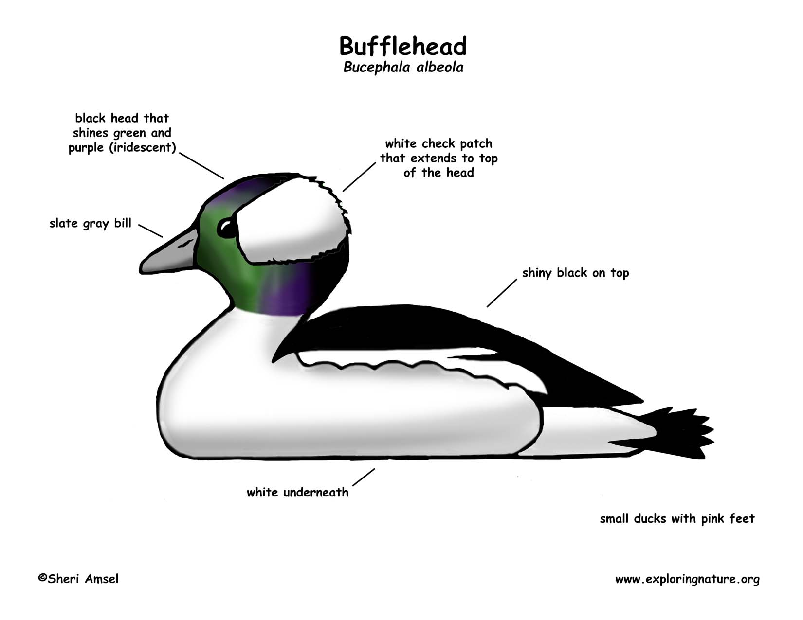 Duck Head Diagram - Residential Electrical Symbols •