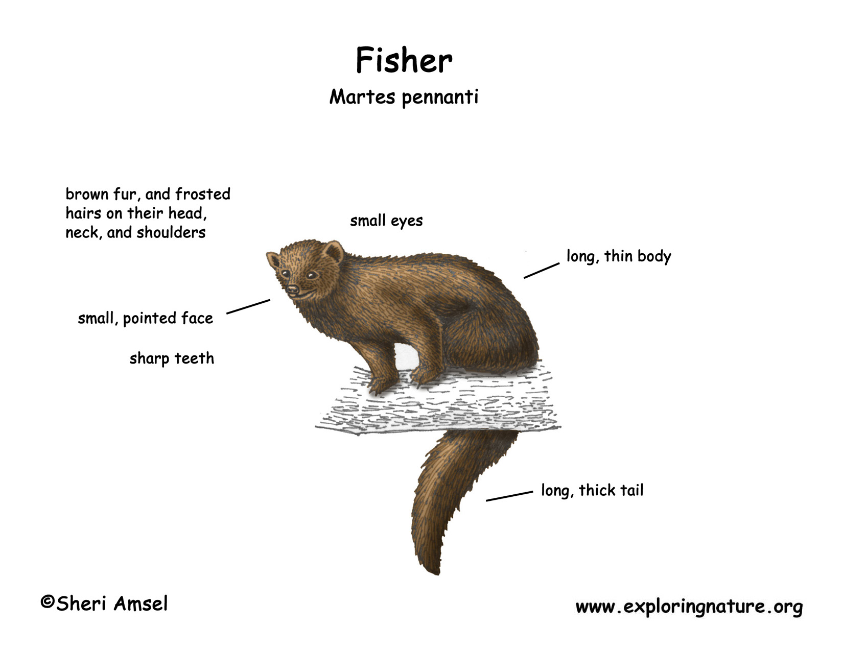 Fisher Diagram | Wiring Diagram on