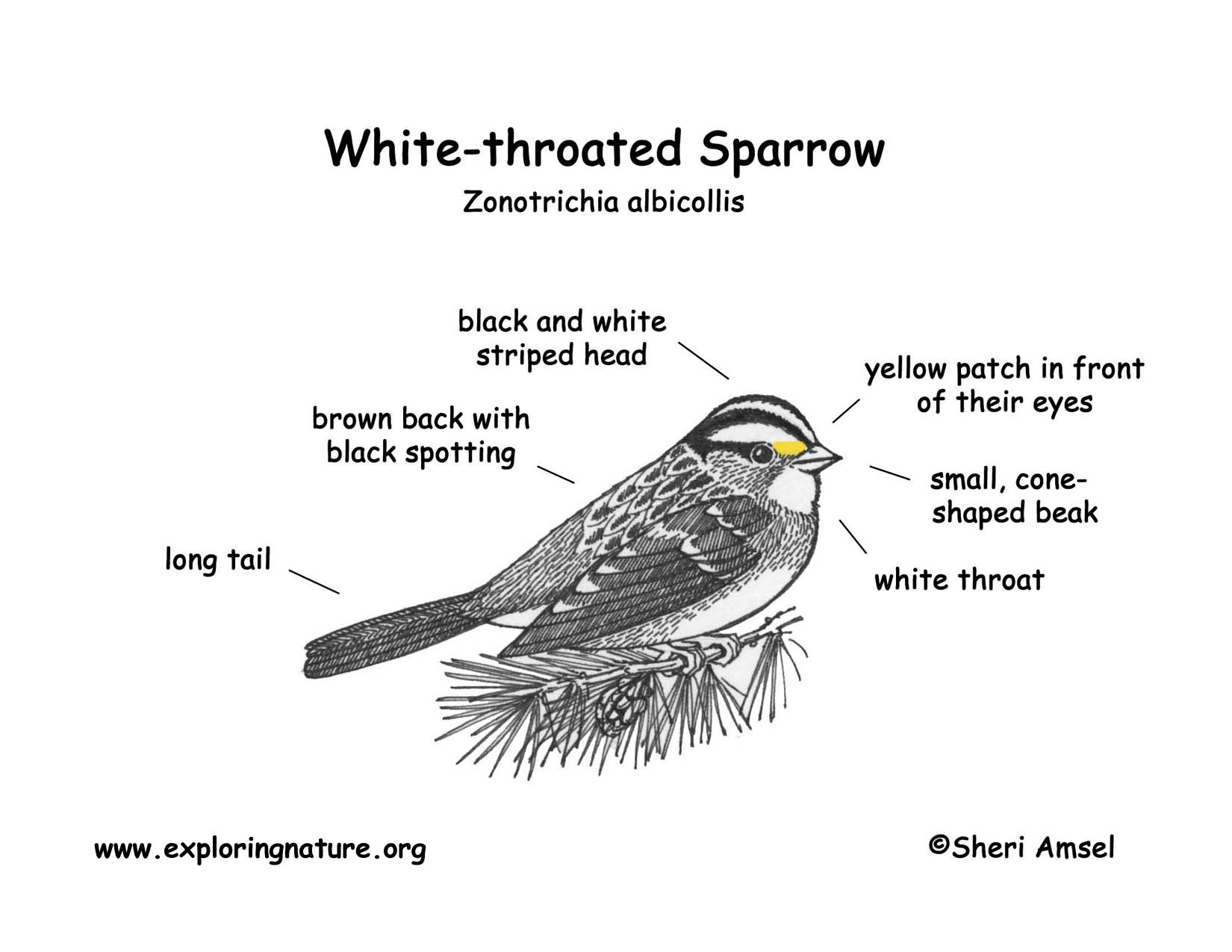 Sparrow Diagram