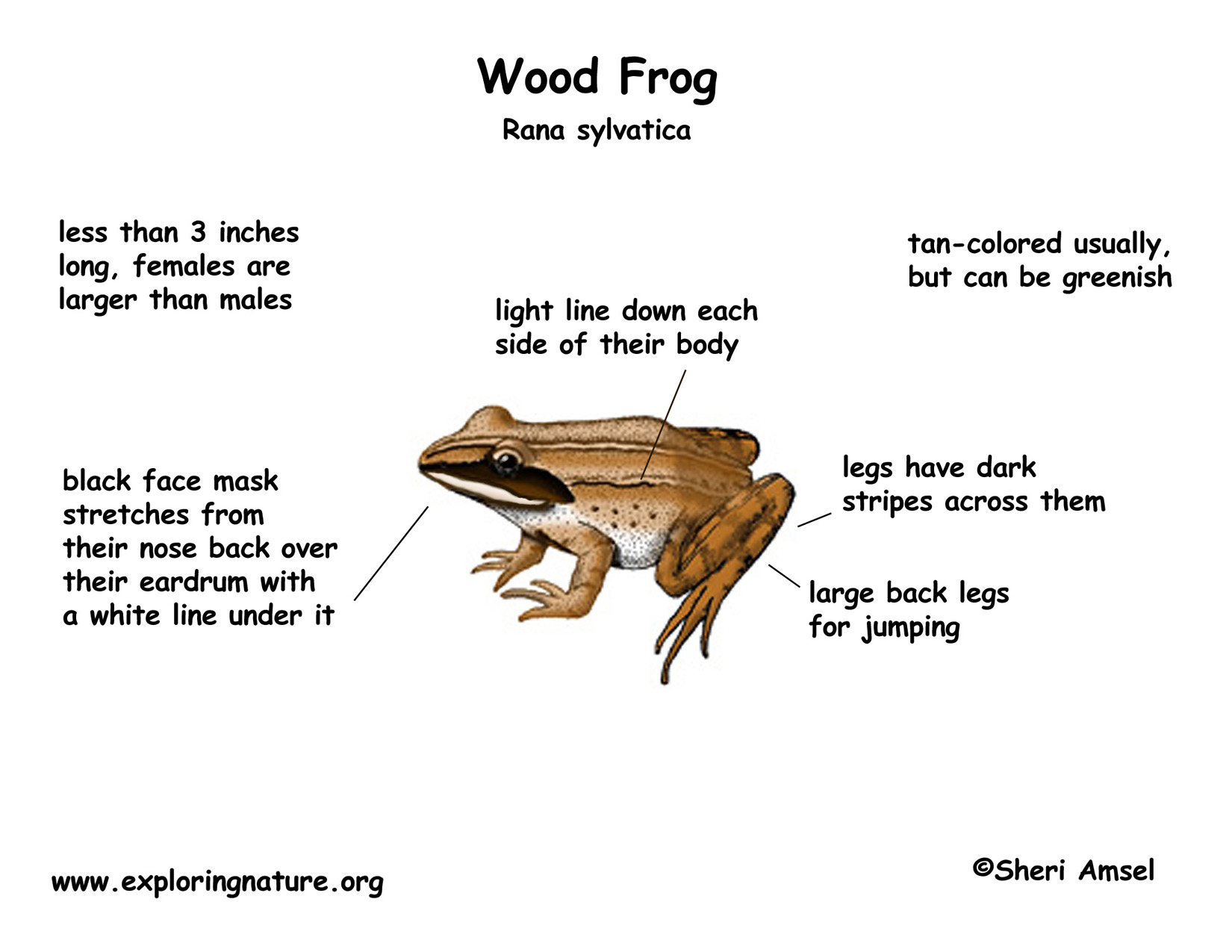 Tree Frogs Diagram - Product Wiring Diagrams •