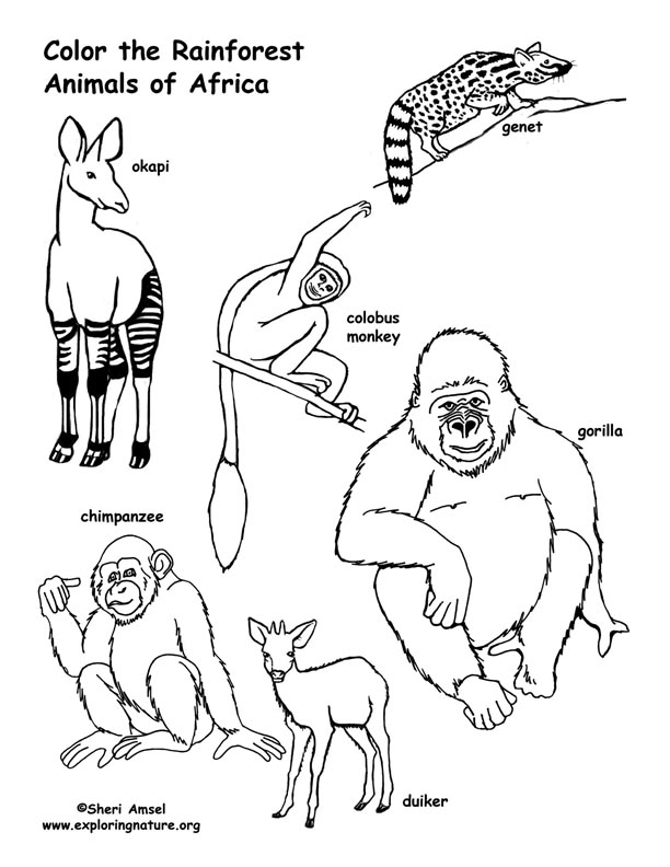 Rainforest African Animals Coloring Page