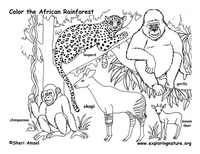 free coloring pages rainforest animals - photo#1