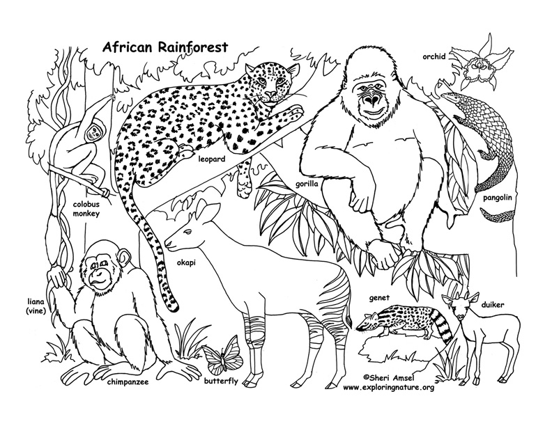 Rainforest African Coloring Page