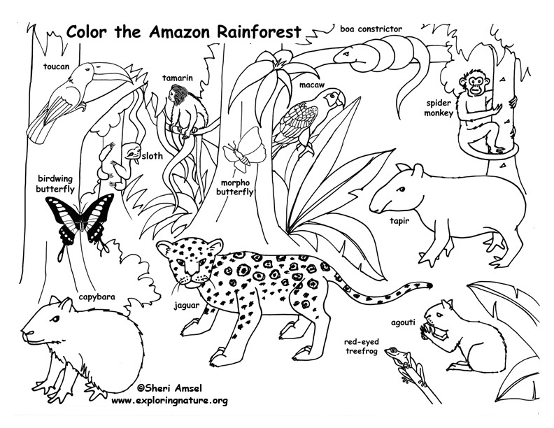 brazilian rainforest animals coloring pages - photo #9