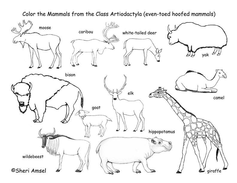 Deer, Camels, Hippos, etc. (Even-Toed Hooved Mammals) Coloring Page