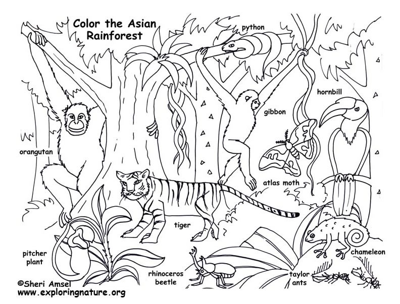 free coloring pages rainforest animals - photo#22