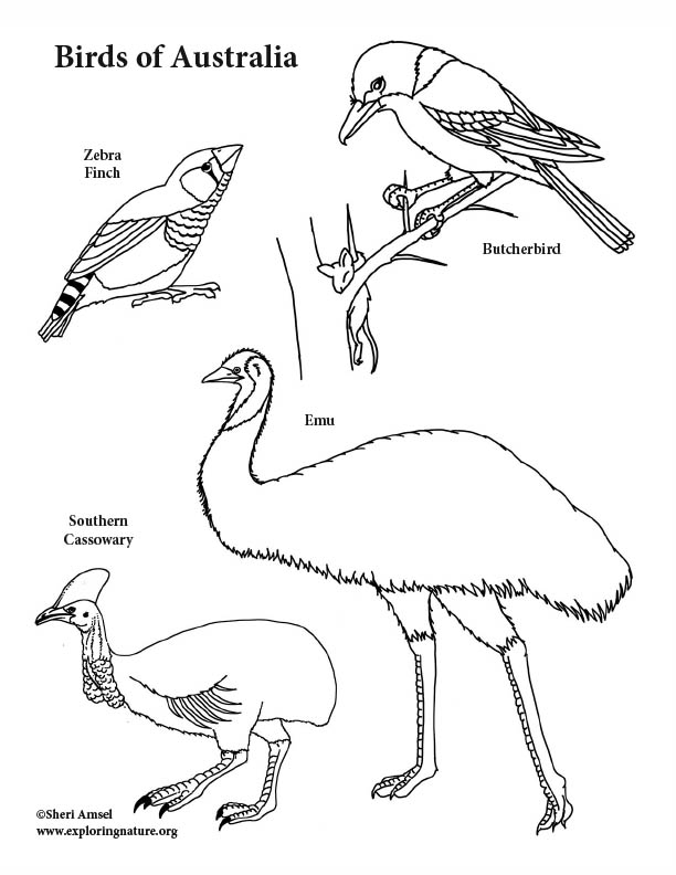 Australia Birds Coloring Page