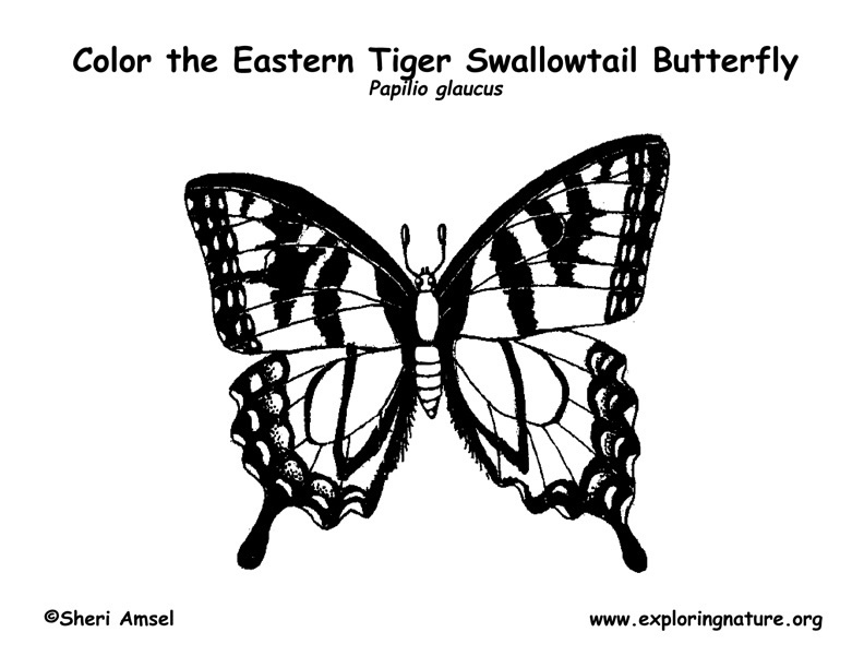 swallowtail butterfly coloring book pages - photo#17