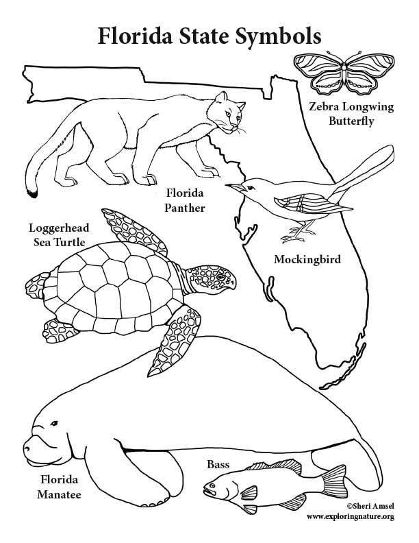 florida state coloring pages - florida state symbols coloring page