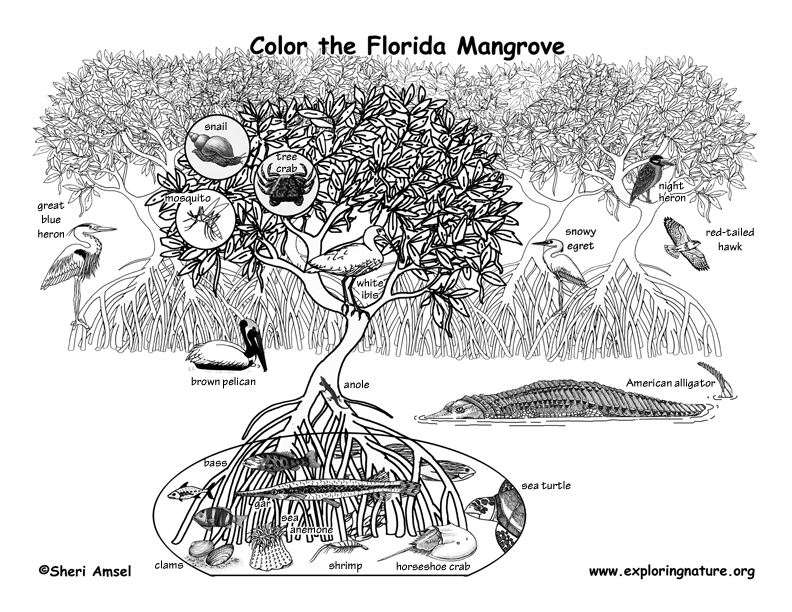 Mangrove Coloring page