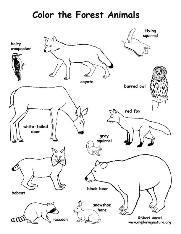 Coloring Pages Of Wetland Animals : Forest animals coloring page