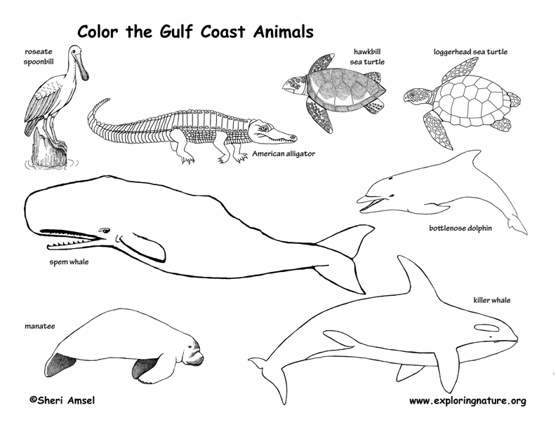 Wetland Animals Coloring Pages Images Animal Habitat Coloring Pages
