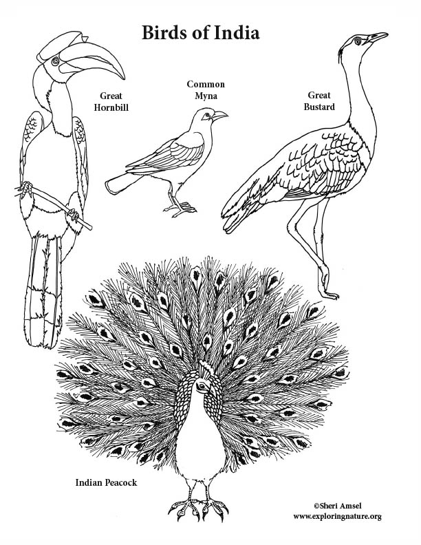 Birds of India Coloring Page