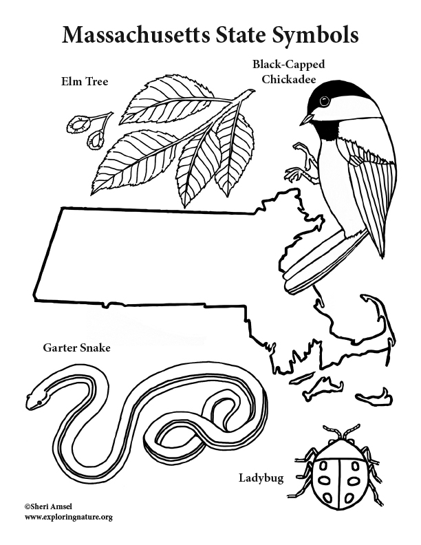 Massachusetts State Symbols Coloring Page