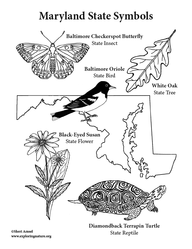 maryland coloring pages - photo#10