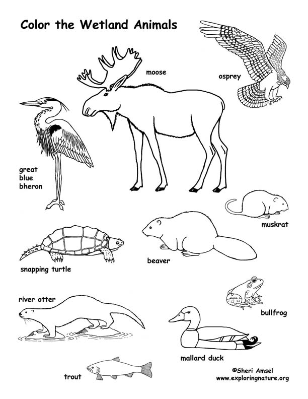 Coloring Pages Plants And Animals : Wetland animals coloring page