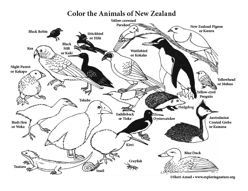 Animal Habitat Colouring Pages Rainforest Habitat Animal Habitat Coloring Pages