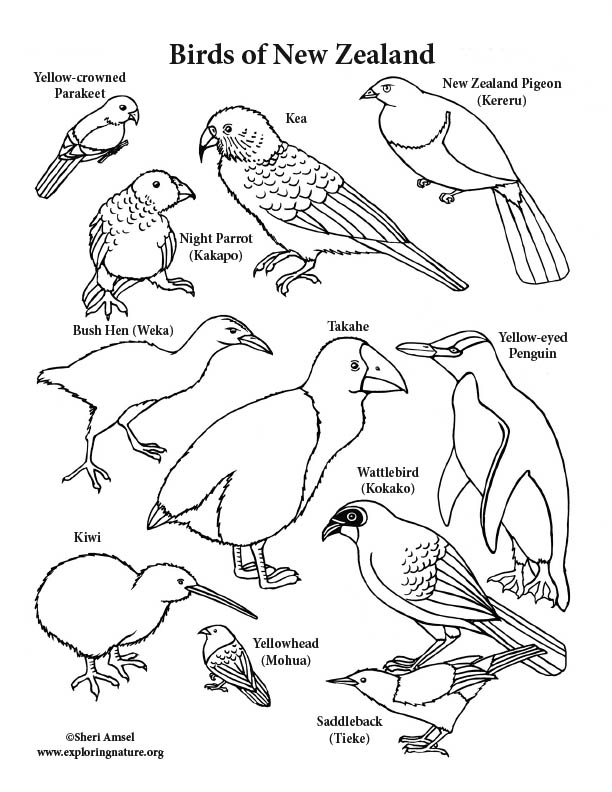 New Zealand Birds Coloring Page