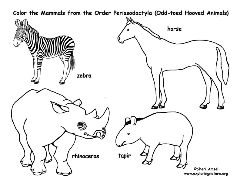 tapir coloring pages for kids - photo#38