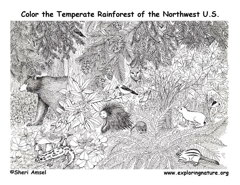 - Pacific Northwest Animals (Temperate Rainforest) Coloring Page