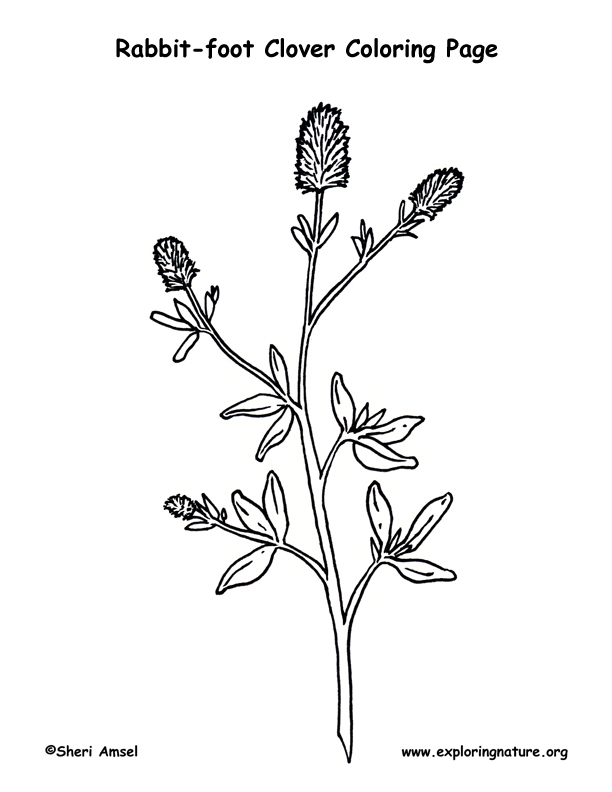 Clover (Rabbit-foot) Coloring Page