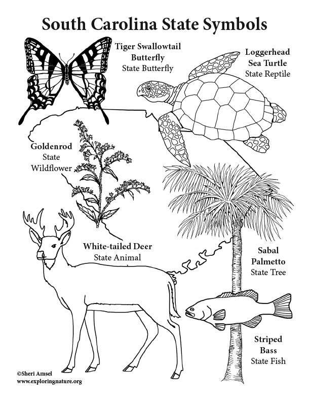 South Carolina State Symbols Coloring Page