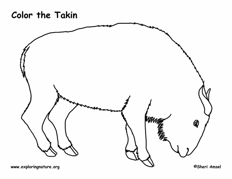 Takin Coloring Page