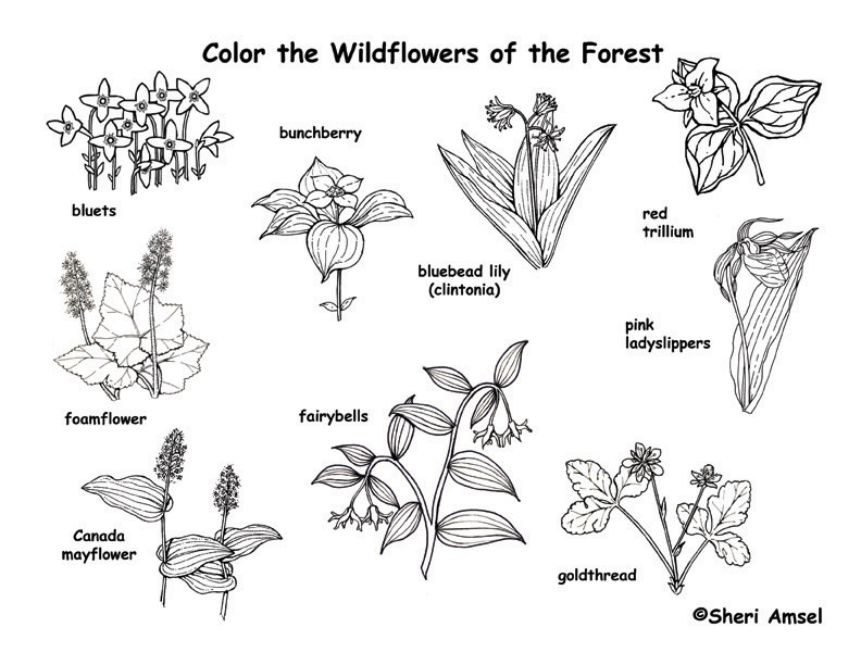 Forest Wildflowers Coloring Page