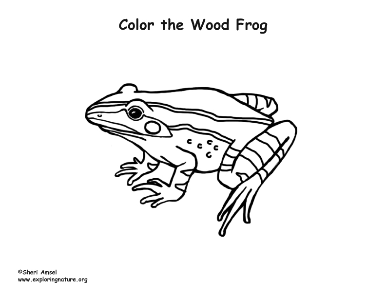Woodfrog Coloring Page